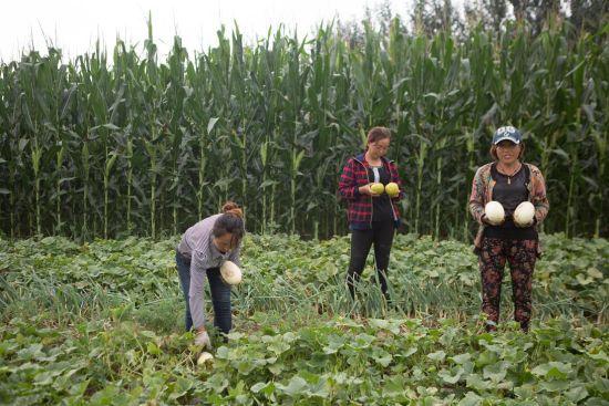长春一企业爱心助农 买滞销瓜送环卫一举两得