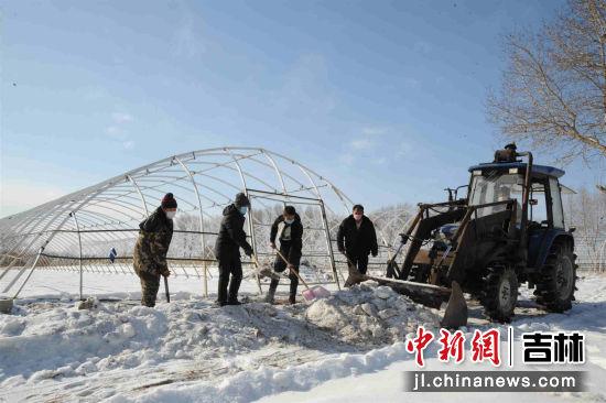 大屯镇英台农机农民专业合作社正忙着清理育苗大棚的积雪
