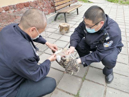 民警救助国家二级保护动物猫头鹰