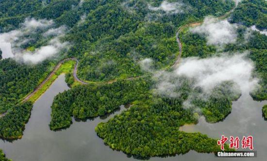 资料图:原始森林云雾缭绕,美如仙境。 赵春亮 摄