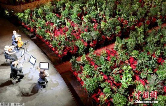 """资料图:当地时间6月22日,西班牙巴塞罗那,利赛奥大剧院重新开放,举办了一场特殊的音乐会,剧院里的观众席""""坐满""""植物。"""