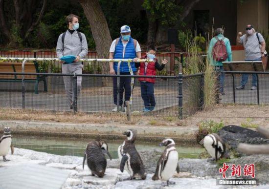 当地时间7月13日,游客在美国加利福尼亚州旧金山动物园参观。