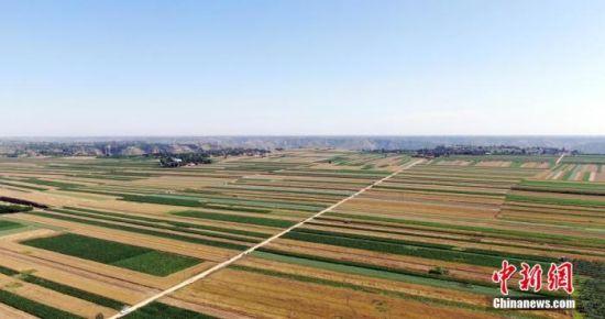 7月中旬,位于黄土高原的甘肃平凉崆峒区20余万亩冬小麦夏粮收割。 宗瑛 摄