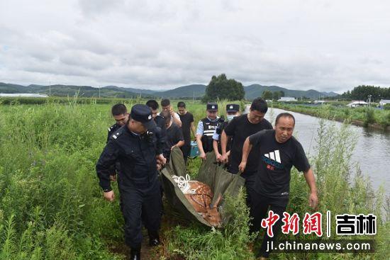 民警正在救助野生梅花鹿 珲春森林公安局/供图