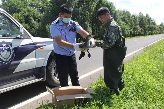 民警救助受伤野生鸬鹚 珲春森林公安局/供图
