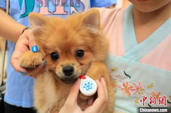居民养的犬只获得养犬登记证。 赵明 摄