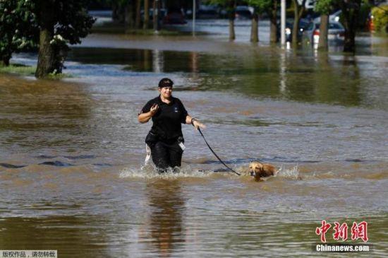 资料图:费城市民在过膝的积水中遛狗。
