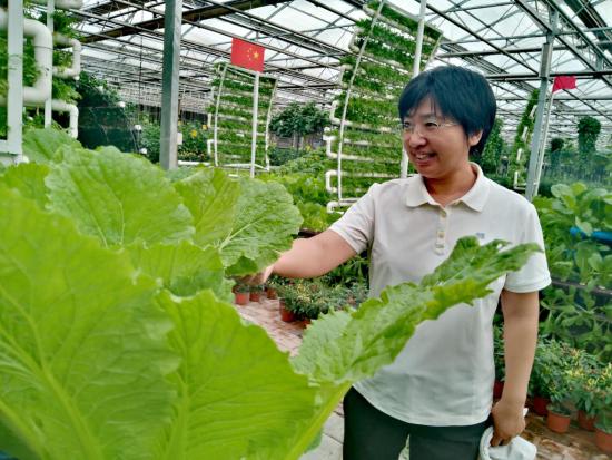 王健君查看高新无土栽培区里种植的蔬菜 高龙安/摄