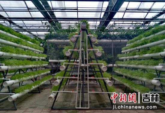 标准化蔬菜种植 高龙安/ 摄