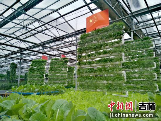 帆船造型的蔬菜种植 高龙安/摄
