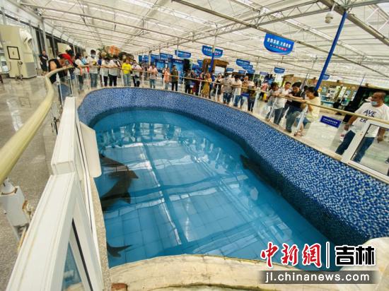 市民游客驻足观赏鲟鳇鱼 李丹/摄