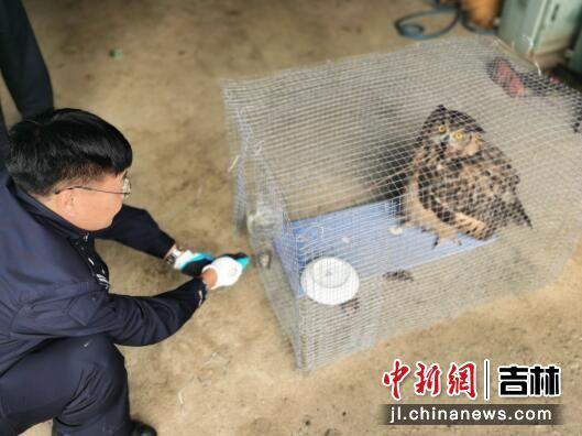 民警救助受伤雕�^ 吉林省森林公安局/供图