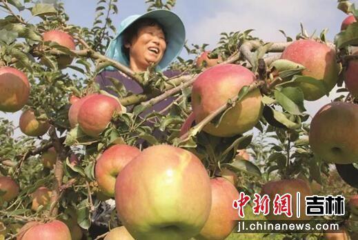 乡村旅游之苹果园。珲春市委宣传部/供图