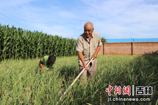 田福和老伴栽植的庭院大蒜喜获丰收 镇赉县委宣传部/供图