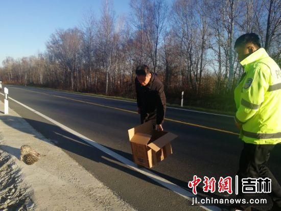 民警救助受伤猫头鹰 黄泥河森林公安局/供图