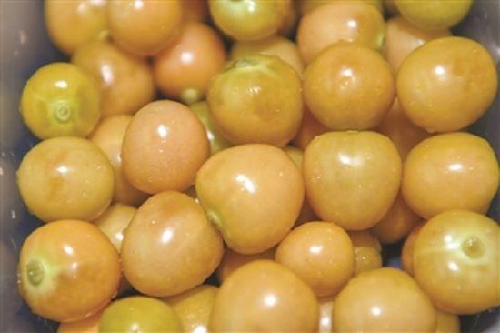 颜色鲜艳、颗粒饱满的黄菇娘。安宣/摄