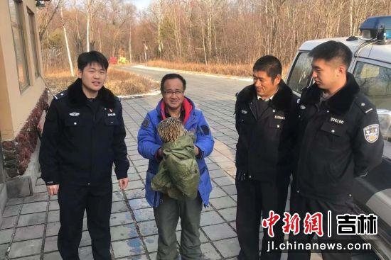 民警救助受伤猫头鹰 白河森林公安局/供图