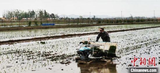 吉林水田插秧正在进行当中。 吉林市委宣传部供图
