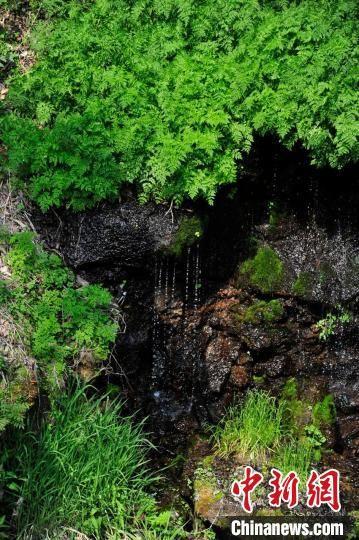 从深山里流淌出来的清泉 高龙安 摄