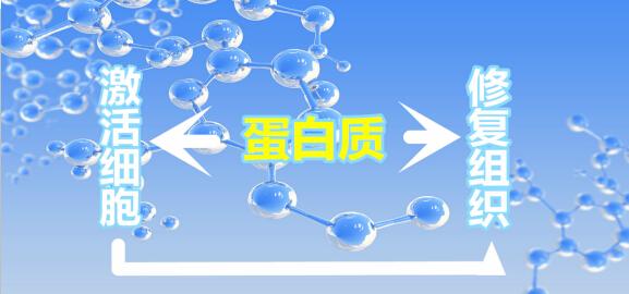 """""""绿三月牌""""康宝蛋白肽冻干粉为您健康保驾护航"""