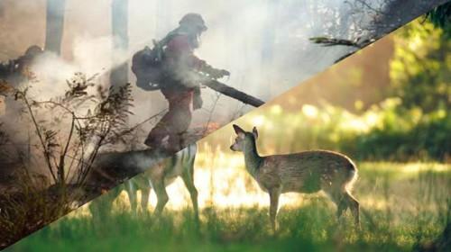 由于火灾等原因而造成的森林破坏,我国不少野生动物种类已经灭绝或